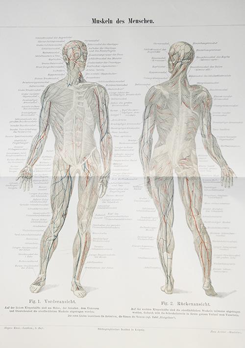 Mensch Körper Lithografie