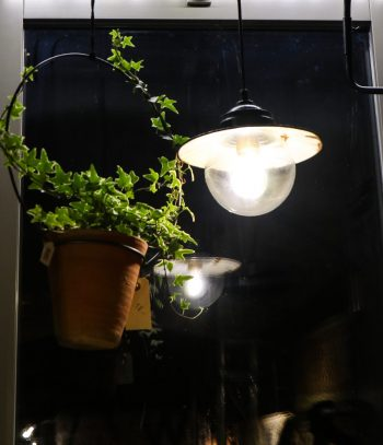kletterpflanze hängetopf